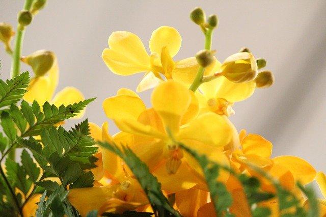 yellow květiny