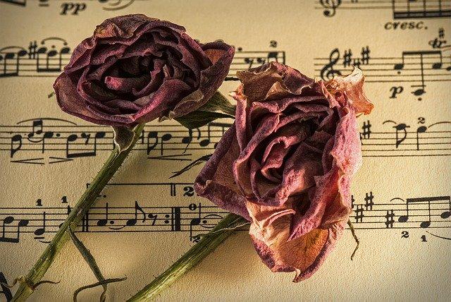 sušené růže na notách